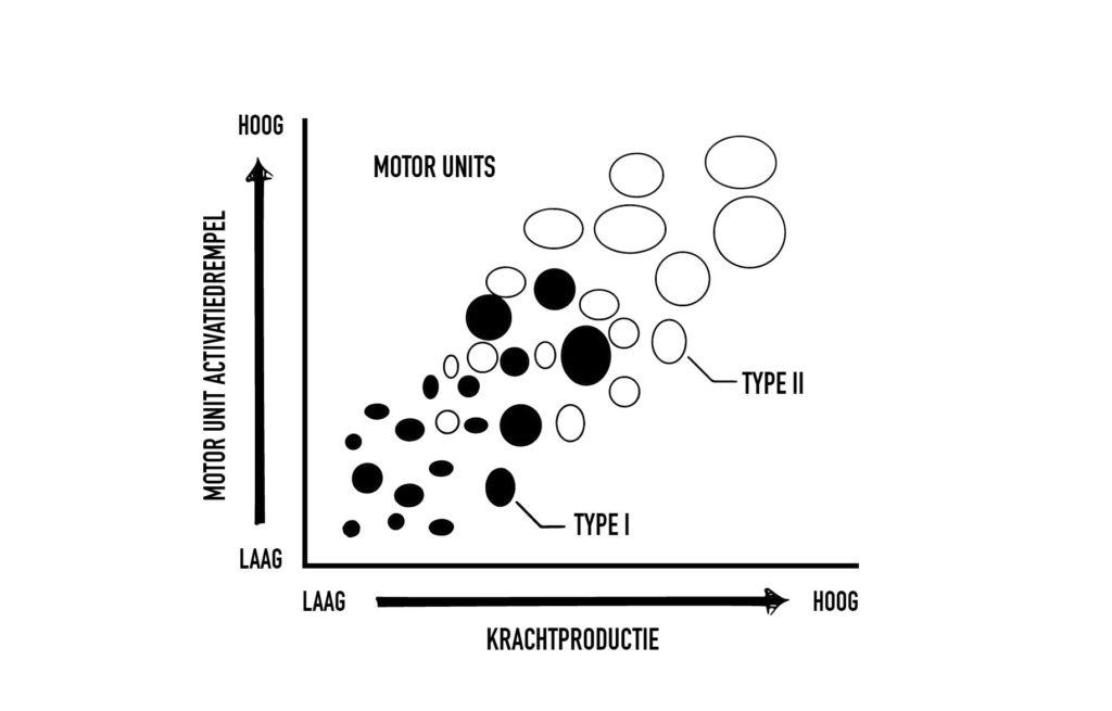 mechanische spanning - size principle